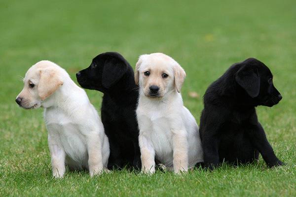 Future Events - Puppies